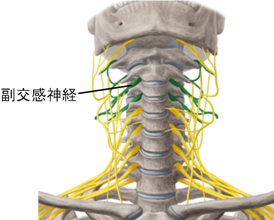 自律神経全体像
