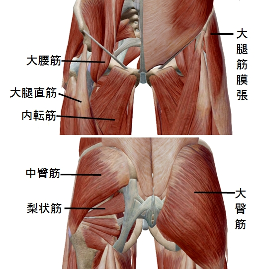 股関節周りの筋肉