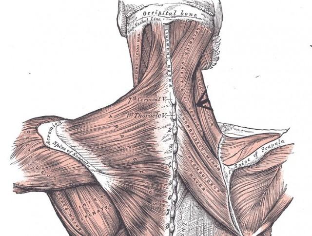 頭痛に関連する筋肉